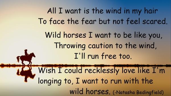 wild horses nb